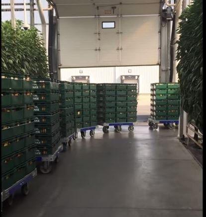 50 x 50 inch tugger carts by FlexQube