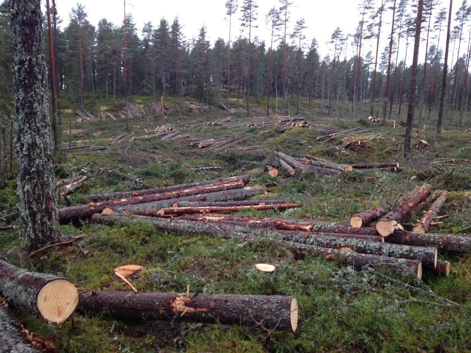 FlexQube helping manufacture forestry machines